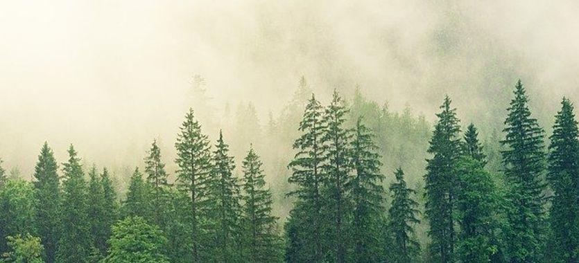 Tintas ecológicas: Alíate con el Medioambiente